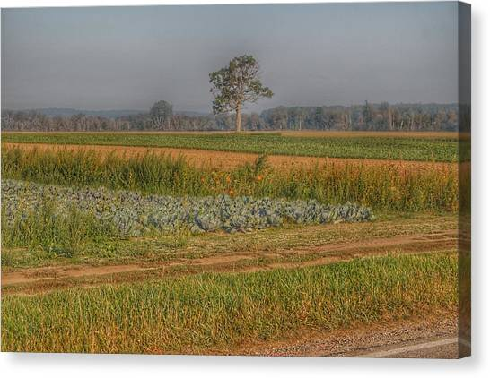 2009 - Cabbage And Pumpkin Patch Canvas Print
