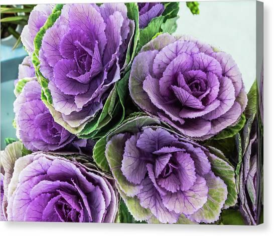 Cabbage Flower Canvas Print