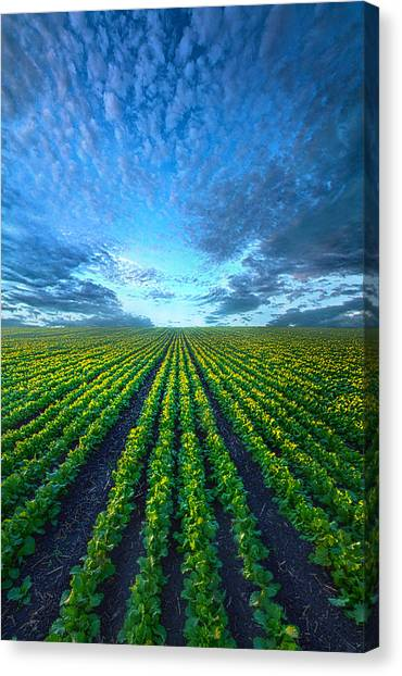 Cabbage Canvas Print - Cabbage Forever by Phil Koch