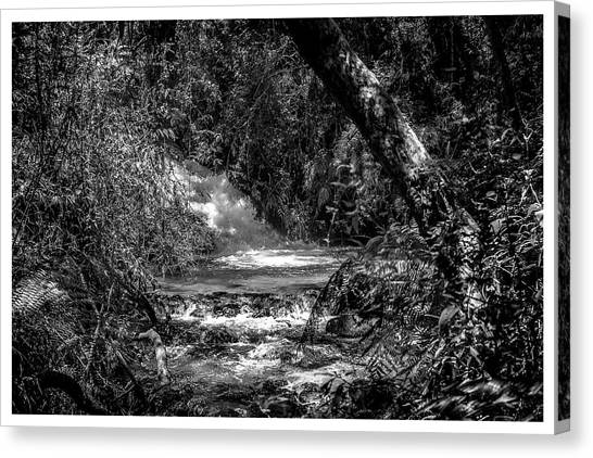 Cachoeira-parque Estadual-horto-campos Do Jordao-sp Canvas Print