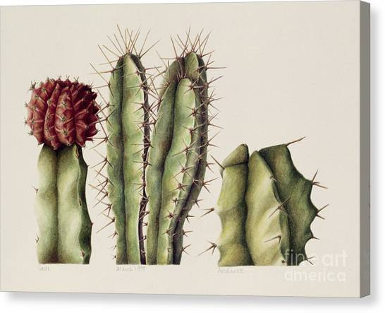 Water Canvas Print - Cacti by Annabel Barrett