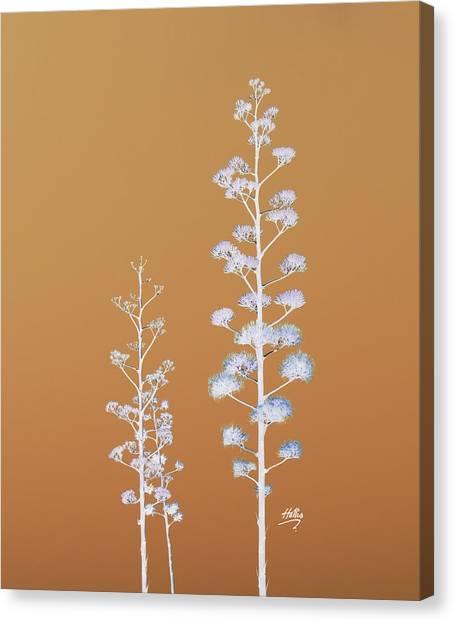 Cactus Architectre Canvas Print