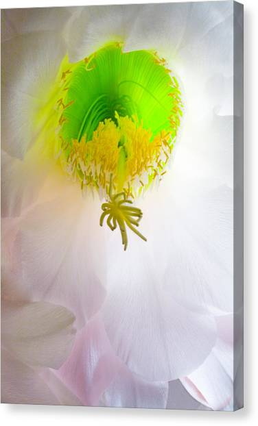 Cactus Bloom Number Six Canvas Print