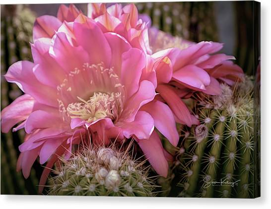 Cactus Bloom Canvas Print