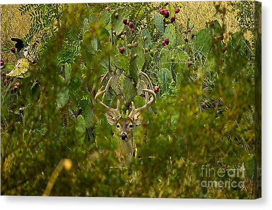 Cactus Buck Canvas Print
