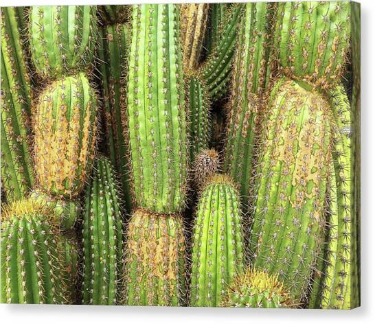 Cactus City Canvas Print