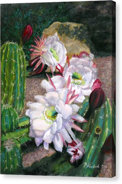 Cactus Flower Canvas Print by Carole Haslock