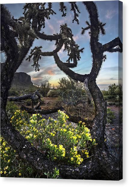 Desert Sunrises Canvas Print - Cactus Framed Sunset Vertical by Dave Dilli
