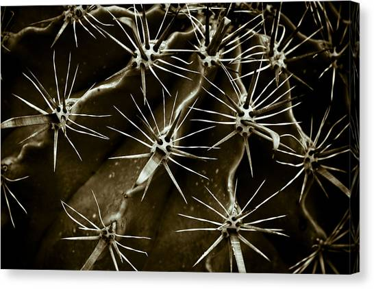 Cactus Canvas Print by Frank Tschakert