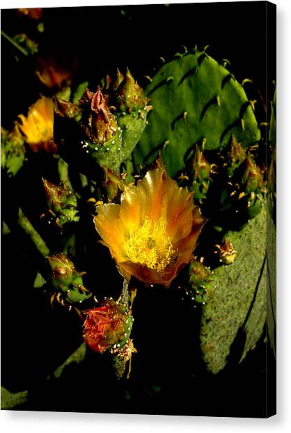 Cactus In Sunset Light Canvas Print by James Granberry