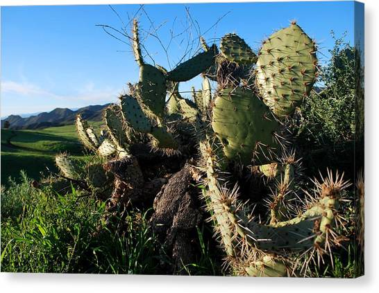 Cactus In The Mountains Canvas Print