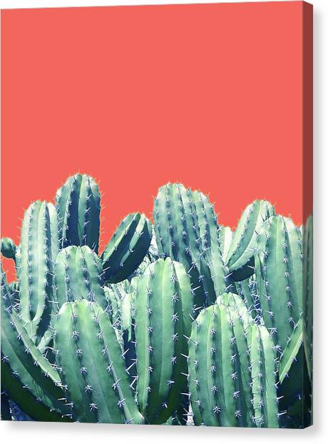 Cactus On Coral Canvas Print