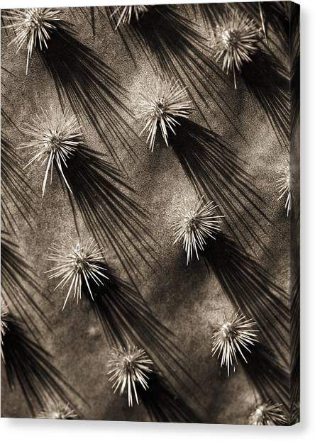 Cactus Shadows Canvas Print