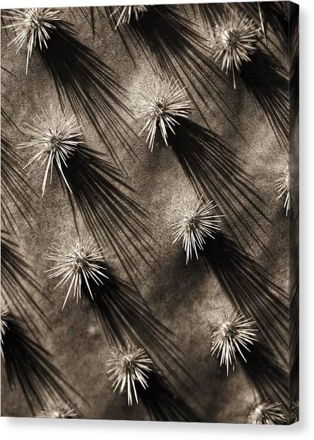 Cactus Shadows Canvas Print by Bob Coates