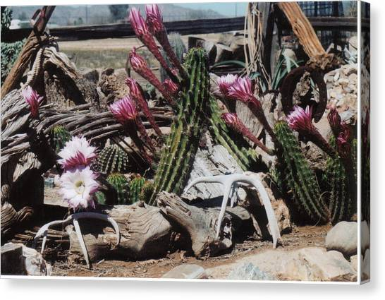 Cactus Still Life Canvas Print by E M Murray
