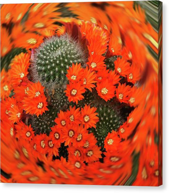 Cactus Swirl Canvas Print