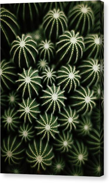 Cactus Canvas Print - Cactus by T*tomorrow