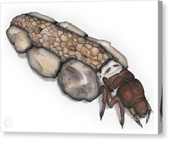 Caddisfly Larva Nymph Goeridae_silo_pallipes -  Canvas Print