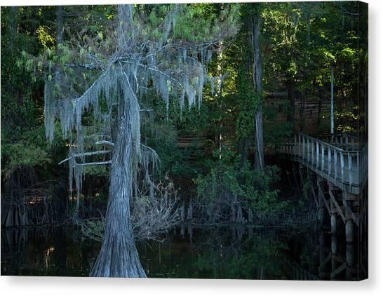 Caddo Lake #1 Canvas Print