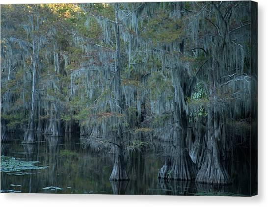 Caddo Lake #3 Canvas Print