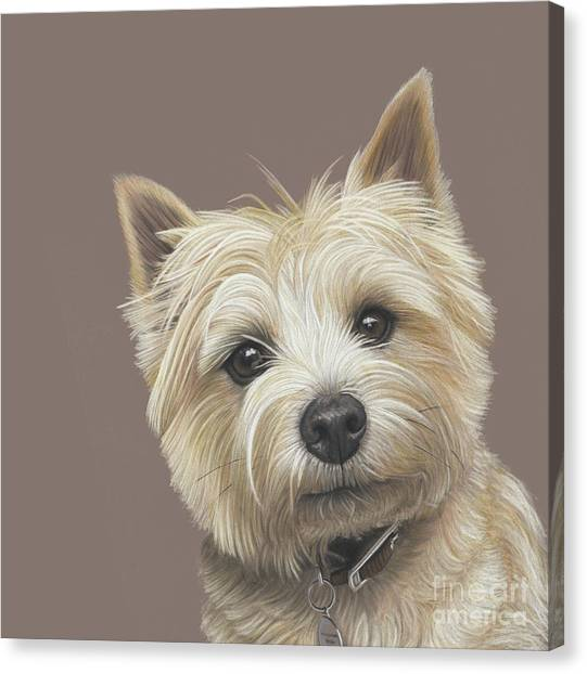 Canvas Print featuring the painting Cairn Terrier - Dave by Donna Mulley