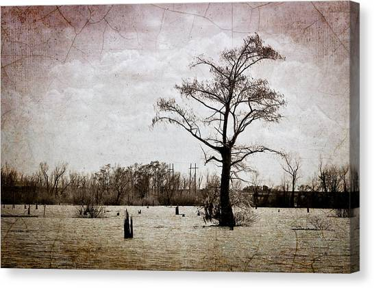 Atchafalaya Basin Canvas Print - Cajun Landscapes by Ray Devlin
