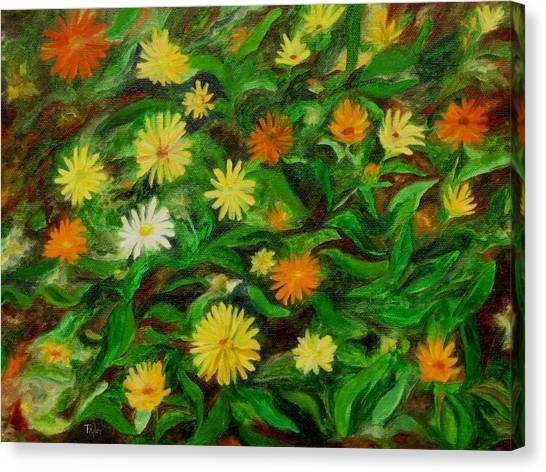 Calendula Canvas Print