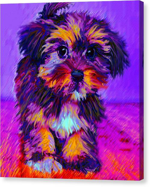 Calico Dog Canvas Print