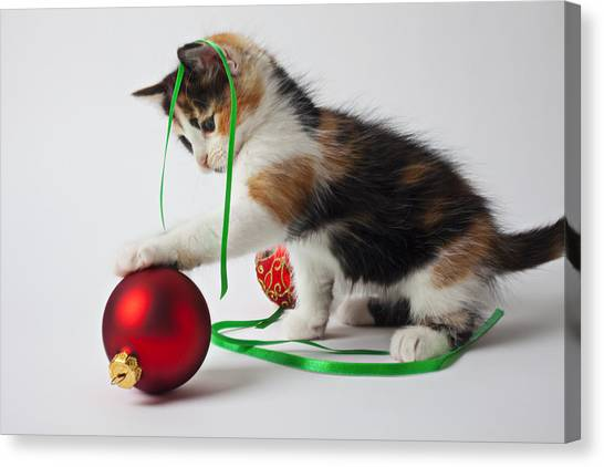 Small Mammals Canvas Print - Calico Kitten And Christmas Ornaments by Garry Gay