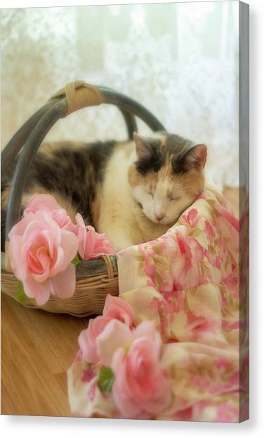 Calico Kitty In A Basket With Pink Roses Canvas Print