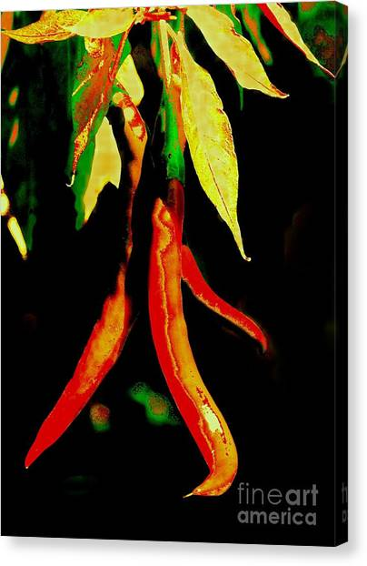Caliente II Canvas Print by Christine S Zipps