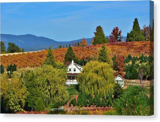 California Apple Hill Canvas Print