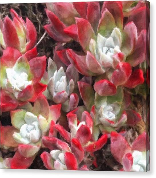 Red Rock Canvas Print - #california #coast #plants #cacti #dry by Jonathan Nguyen