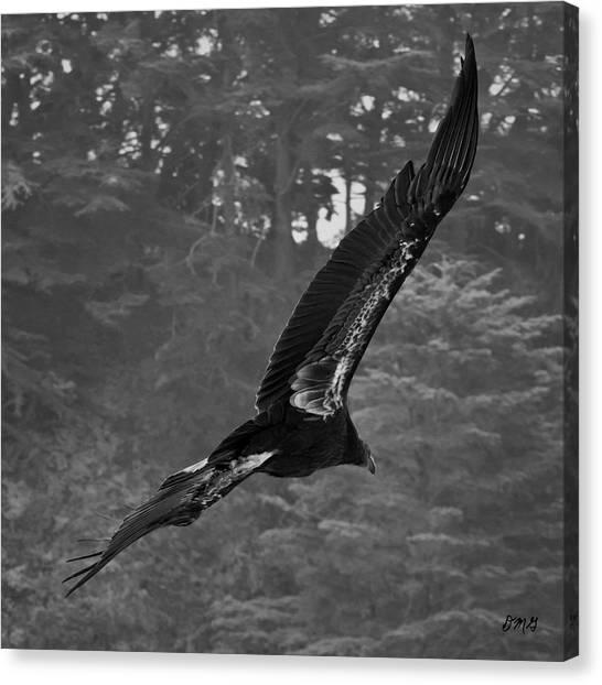 Condors Canvas Print - California Condor In Flight II Bw by David Gordon