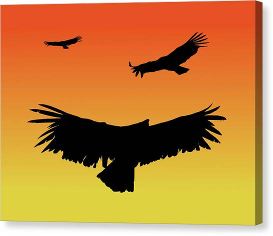 California Condors In Flight Silhouette At Sunset Canvas Print
