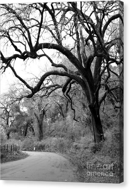 California Country Road Canvas Print