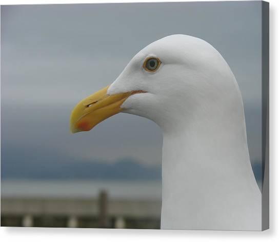 California Gull Canvas Print by Wayne Whitney