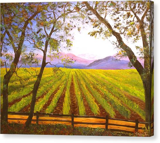 California Napa Valley Vineyard Canvas Print by Connie Tom