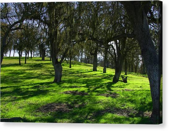 California Oak Woodland With Dappled Sunlight Canvas Print