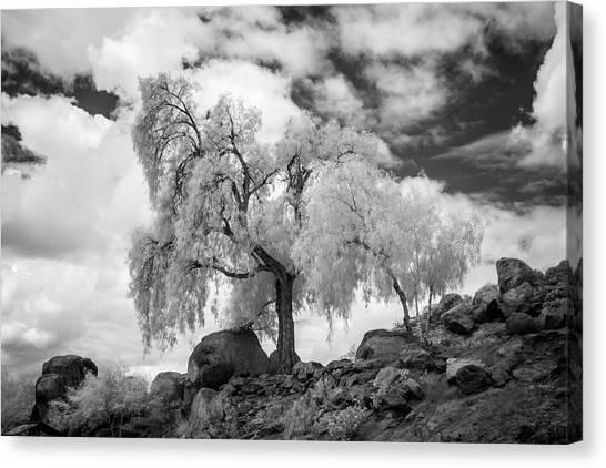 Canvas Print - California Pepper Tree by G Wigler