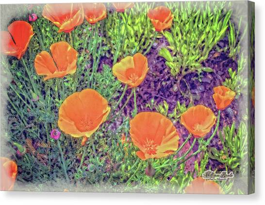 Canvas Print featuring the photograph California Poppys Too by William Havle