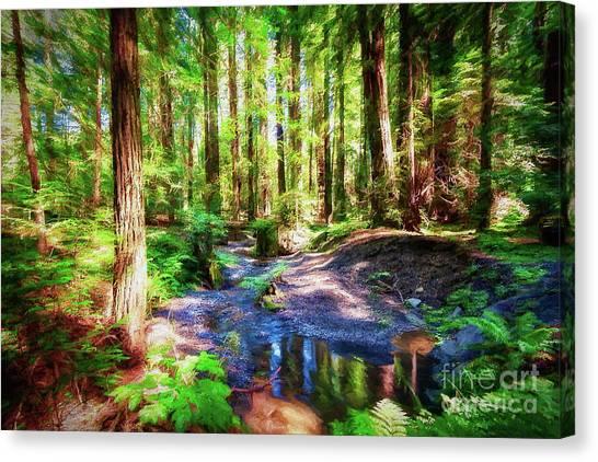 California Redwood Forest Wetlands Ap Canvas Print by Dan Carmichael
