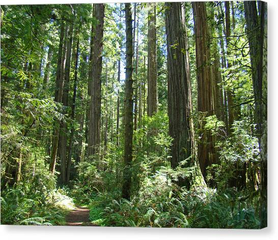 Redwood Forest Canvas Print - California Redwood Trees Forest Art Prints by Baslee Troutman