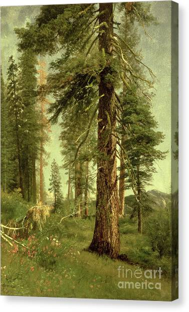 California Canvas Print - California Redwoods by Albert Bierstadt