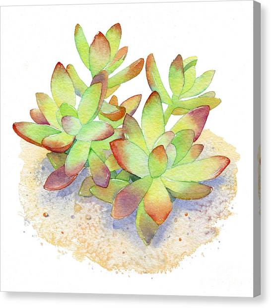 Cactus Canvas Print - California Sunset Succulent by Laura Nikiel