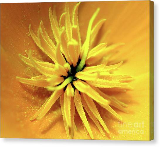 Californian Poppy Macro Canvas Print