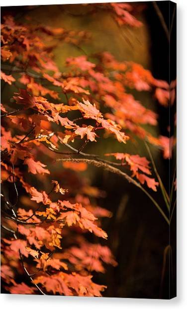 Mountain Sunrises Canvas Print - Call Of Autumn by Aaron Bedell