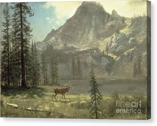 Stag Canvas Print - Call Of The Wild by Albert Bierstadt