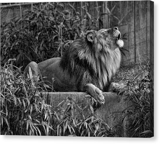 Call Of The Wild Bw Canvas Print by Keith Lovejoy