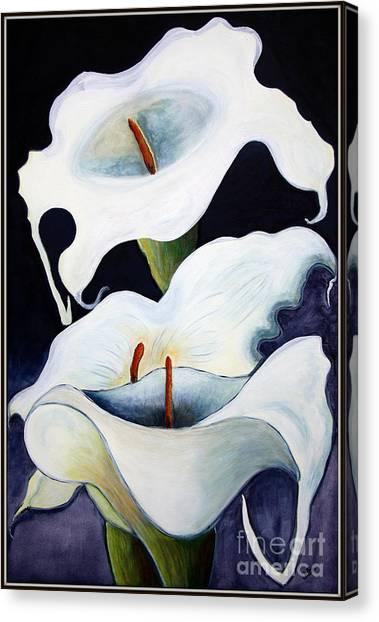 Calla Lilies.. Canvas Print